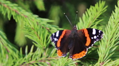 Dark butterfly red admiral Stock Footage