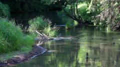 The forest river in beams of the morning sun - stock footage