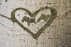 Heart Engraved on a Tree - stock photo