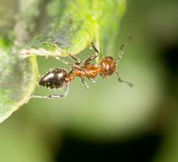 Ant in nature. close-up Stock Photos