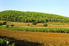 Italian wine Puglia Stock Photos