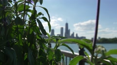 Chicago skyline  Focus change Plant to city Stock Footage