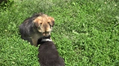 4K Cute brown dog feed baby green grass abandoned pet animal hungry doggie day   Arkistovideo