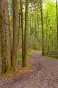 Winding Path in the Forest Stock Photos
