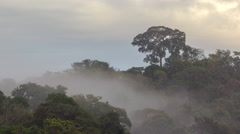 Time-lapse of mist blowing through the rainforest canopy - stock footage