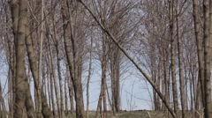 4K Zoom out empty forest tree spring sunny day natural idyllic place peaceful  Stock Footage
