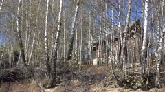 4K Rustic hunter house forester habitat forest tree woodland spring day wildlife Stock Footage