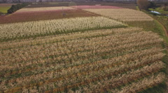 Stonefruit orchard aerial tracking shot Stock Footage