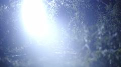 Female person walk across a garden in dark 4K Stock Footage