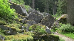 Rockgarden trail Glacier national park Stock Footage