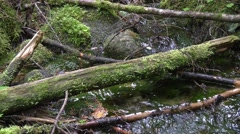 Creek close-up Stock Footage