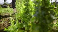 Removing green weed on garden 4K Stock Footage