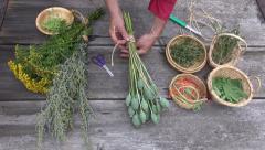 Man  gardener herbalist  preparing poppies  and various medical herbs Stock Footage