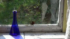 Peacock  Butterfly trying to fly through window glass in old room Stock Footage