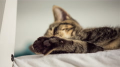 Kitten licking paws while laying on bed 4K Stock Footage