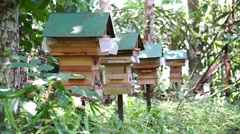 Bee farm in the jungle of Sabah Malaysian Borneo. - stock footage