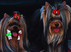 Couple canine 1 Stock Photos