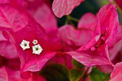 Flowers 3 - stock photo