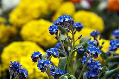 Flowers 11 - stock photo