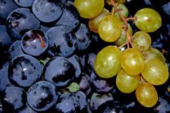 Grape...together Stock Photos