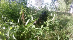 Sniper with a gun camouflaged in the grass in forest searching victim Stock Footage
