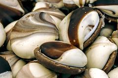 Chocolate shells - stock photo