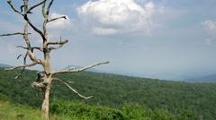 Dead tree Shenandoah national park forest Stock Footage