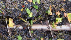 Stock Video Footage of Stemmer crusher crushing grapes at a winery