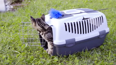 Kitten in transport box first time outside 4K - stock footage