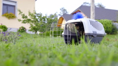 Kitten in transport box outside on green lawn 4K Stock Footage