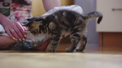 Kitten jump around female master 4K Stock Footage