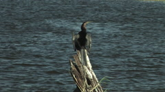 Crane Resting on a Log in the Chobe National Park BOTSWANA Stock Footage