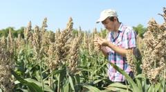 Farmer in millet corn field hands holding millets 2 Stock Footage