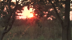 African Sunrise in a rural village near  Kitwe, Zambia Stock Footage