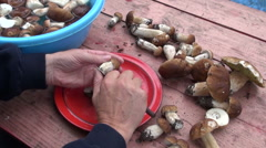 Man cleaning fresh boletus edulis mushrooms Stock Footage