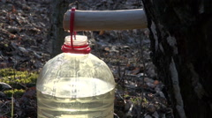 Birch tree sap dripping in plastic bottle through wooden spigot Stock Footage