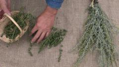 Man gardener preparing  wormwood and savory herbs for drying on linen - stock footage