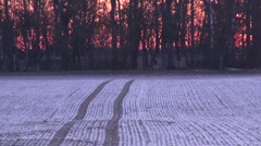 Frosty winter agriculture crop field during sunset Stock Footage