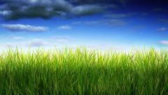 Long green grass waving over blue timelapsed sky. Loopable. Stock Footage