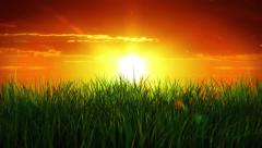Sunrise over a green grass, cloudy sky. Long grass waving in the breeze. Stock Footage