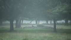 Thick english fog in the woods in England Stock Footage
