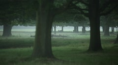 Magic and scary forest with deer - stock footage