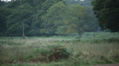 Two stags in the meadow Stock Footage
