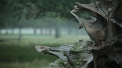 Snag in the fog - Gothic Mood Stock Footage
