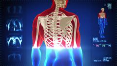 Detailed human body turning. Skeleton. Loopable. Red and white. Blue background. - stock footage