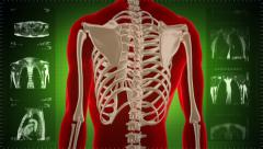 Highly detailed torso scan. Loopable. Red and blue. Green background. Stock Footage