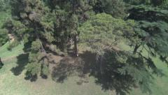 Travel from the sky to a woman seated by a tree. Aerial shot. Technology. Stock Footage
