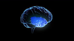Spinning human brain with zones lighting up. Loopable. Science. Stock Footage