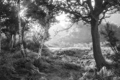 Stunning sunrise landscape in misty New Forest countryside in black and white - stock photo