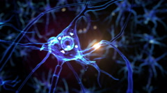 From neurons during synapsis to a human head. Loopable. Biology. Dolly out. Arkistovideo